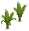 Large palm leaves on white background vector image