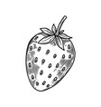 strawberry in engraving style design element vector image vector image