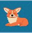 cute welsh corgi lay and sleep element for your vector image