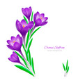 floral spring background for design on white vector image vector image
