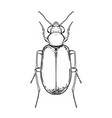 hand drawn bug in vintage style beetles vector image vector image