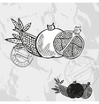 Hand drawn decorative pomegranate fruits vector image