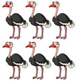 ostrich with different facial expressions vector image vector image