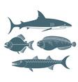 Predator Fish vector image vector image