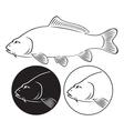 fish carp vector image vector image