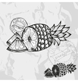 Hand drawn decorative pineapple fruits vector image vector image