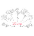 wild rose flowers drawing and sketch with line-art vector image vector image