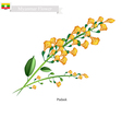 National Flower of Myanmar Yellow Padauk Flowers vector image