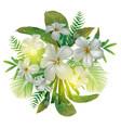 plumeria flower bundle vector image vector image