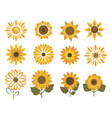 Set sunflower flowers collection cartoon