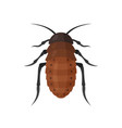 cockroach icon on white background vector image