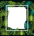 cute framework with exotic leaves plants vector image vector image