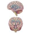 Brain diagram vector image vector image