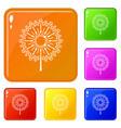 dandelion flower icons set color vector image vector image