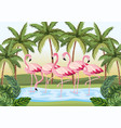 tropical flamingos animals with palms and leaves vector image