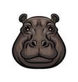 hippopotamus animal wild muzzle head isolated vector image vector image