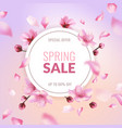 sakura sale spring discount pink cherry blossom vector image