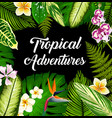 tropical plants and flowers palm leaves poster vector image vector image