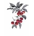 Watercolor garden rowan plant vector image vector image