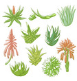 aloe vera hand drawn set vector image