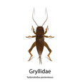 gryllidae on white background vector image vector image