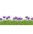 spring floral border with bright purple crocuses vector image vector image