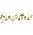 Plants in hanging pots set
