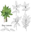 bay leaves set vector image