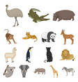 different animals cartoon icons in set collection vector image vector image