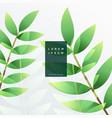 elegant green leaf background vector image vector image