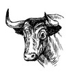 hand drawn bull vector image