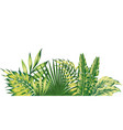 jungle composition tropical leaves pattern vector image vector image
