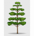 tall tree on transparent background vector image