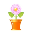 pink flower in pot vector image vector image