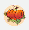 ripe pumpkin with leaves harvest agriculture vector image