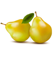 Fresh pears isolated on white vector image