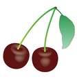 cherry 1 v vector image vector image