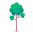 flat icon of tall tree isolated on white vector image