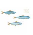 Sprats vector image
