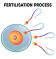 Diagram of fertilisation process vector image vector image