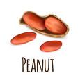 peanut icon realistic style vector image vector image