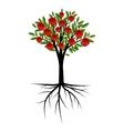 Pomegranate decorative tree vector image vector image