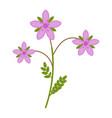 stork flower flat icon wild flowers plant vector image vector image
