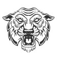 tiger head isolated on white background images vector image vector image