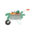 local organic harvested crops in a wheelbarrow vector image vector image