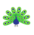 peacock with open tail feather out beautiful vector image