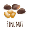 pine nut icon realistic style vector image vector image