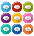 Round buttons with an internal organ vector image vector image