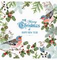 bird christmas big frame vector image