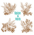 poster of spices or herbs sketch seasonings vector image vector image